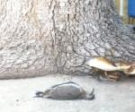 Animales mueren por calor extremo