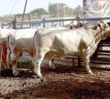 Satisfacen lluvias a  ganaderos