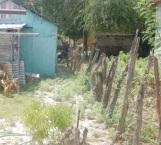 Promueven patio limpio