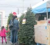 Recomiendan no comprar árboles navideños naturales