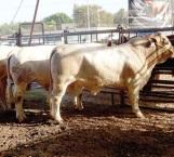 Pronósticos de lluvia anima a productores del campo y ganaderos