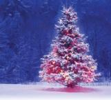 ¿Por qué se arma el árbol de navidad el 8 de diciembre?