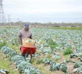 Transforman hogares con frutas y verduras