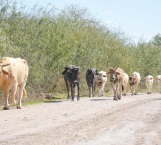 Grave pérdida para ganaderos por la sequía