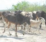 Sufren los productores del campo y ganaderos