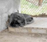 En cuarentena ponen a animales trasladados