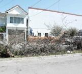 No retiran árboles cortados en la colonia Rodríguez que afectan visibilidad a conductores