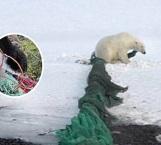 Fotos muestran plástico y deshechos en el Ártico
