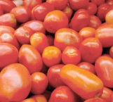 Drástico aumento al precio del tomate