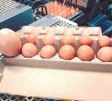 Encontró un huevo gigante en su granja