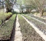 Promueven reforestación