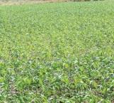 300 mil hectáreas sembradas tienen asegurado el riego