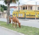 Grave riesgo animales sueltos en las calles