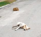 Sin castigo por tirar perro muerto en la vía pública