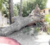 Fracasa proyecto de escultura en tronco sin apoyo