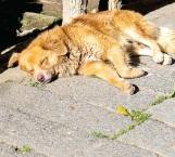 Golpe de calor mata a la mascota de familia en casa