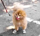 El intenso calor no sólo es negativo para las personas si no también en mascotas
