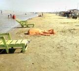Tienen en la playa tristes vacaciones