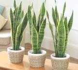 Plantas de interior que purificarán el aire de tu casa