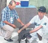 Disponen de vacunas para perros y gatos