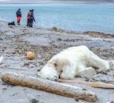 Turistas fueron al hábitat natural  de los osos polares