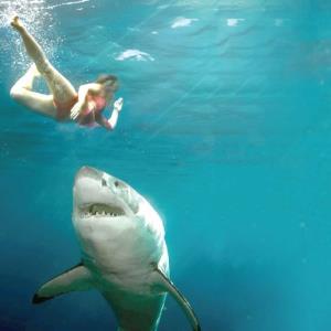 Consejos para evitar un ataque de tiburón