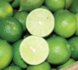Desarrollan biofungicida para conservar más tiempo cítricos