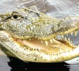 ¿Qué hacer en caso de ser atacado por un cocodrilo?