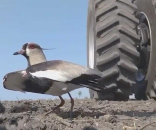 Un tractor amenazó su nido