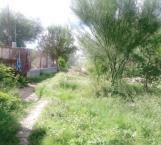 Desaparece calle al ser invadida por la naturaleza