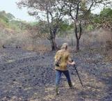 Por años se dedicaron a reforestar una selva