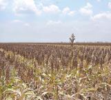 Esperan campesinos recursos para los estados para el agro