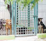 Disminuir la proliferación de animales callejeros prioridad de antirrábico