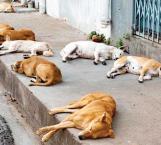 Sin casos Reynosa de VIH-Sida en animales, desconocen modo de transmisión de enfermedad