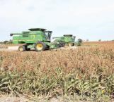 Colapsan al agro sequía y helada