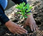 Estimado lector, ante los problemas que esta causando el cambio climático, ¿Cree usted que falte algún programa de reforestación en Reynosa?