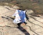 Muere niño de 2 años ahogado en el río Bravo