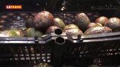 Se vende el aguacate hasta en 91 pesos el kilo