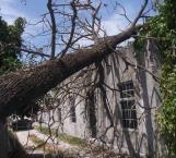Cae árbol sobre vivienda