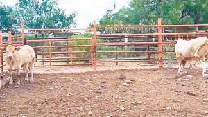 Claman productores ayuda para el campo