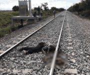 Muere ranchero arrollado por el tren