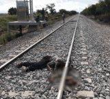 Destroza tren carguero a hondureño