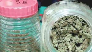 Buscan regular uso de cannabis