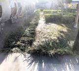 Destrozan jardineras asistentes al Grito