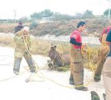 Rescatan a burro de canal