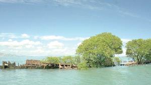 Barco hundido hace 100 años ya se rinde ante la naturaleza