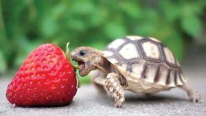 Tiernos animales comiendo frutas que parecen sacados de película de terror