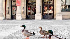 Animales 'invaden' la ciudad en la cuarentena