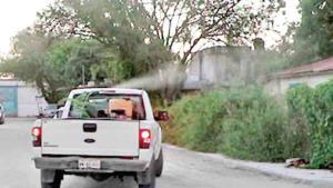 Combaten proliferación de mosquito transmisor
