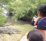 Afecta al turismo la plaga de cocodrilos